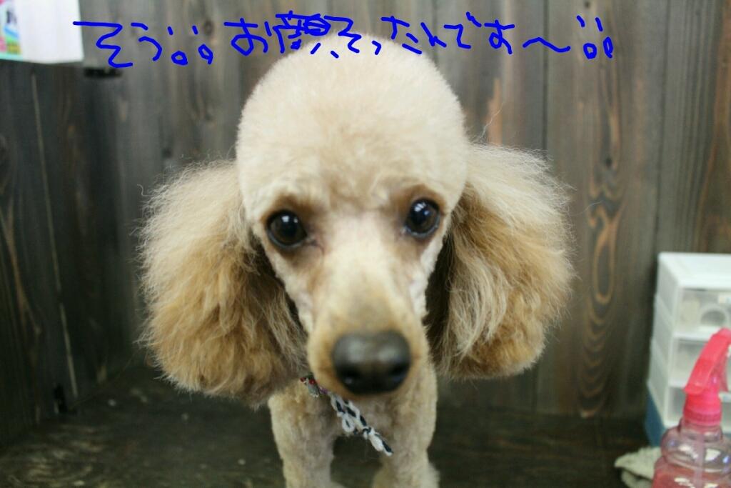 ドラマ_b0130018_21185547.jpg