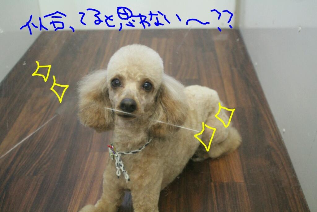 ドラマ_b0130018_21190195.jpg