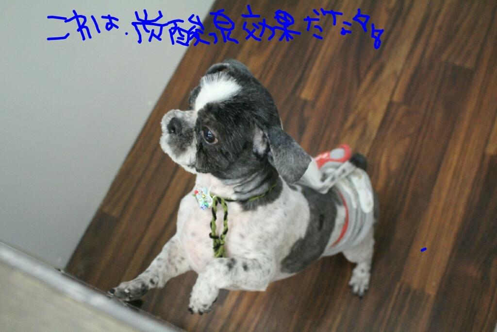 ドラマ_b0130018_21255064.jpg