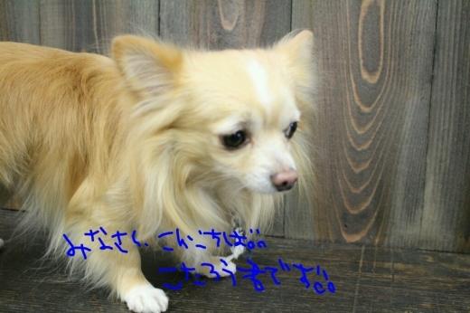 ドラマ_b0130018_21302313.jpg