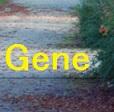非小細胞肺癌に対してルーチンに遺伝子異常を調べる意義_e0156318_10552988.jpg