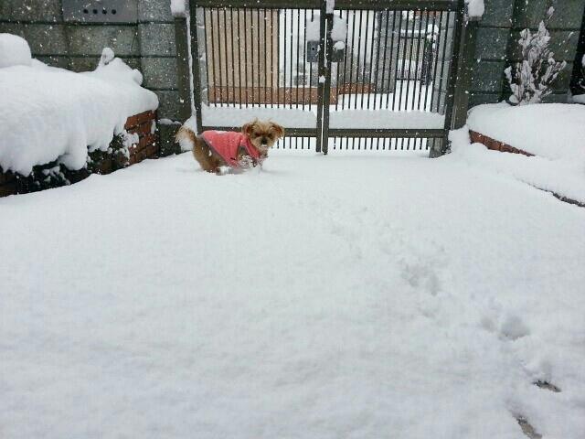 雪のため臨時店休_a0246319_09500505.jpg