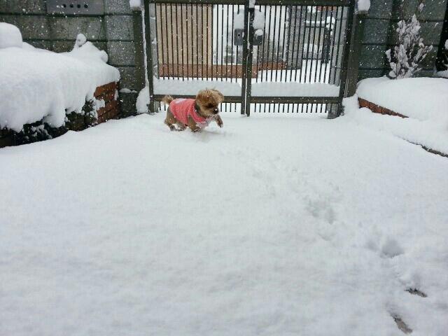 雪のため臨時店休_a0246319_09500957.jpg