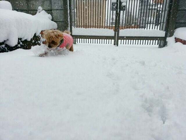 雪のため臨時店休_a0246319_09501397.jpg