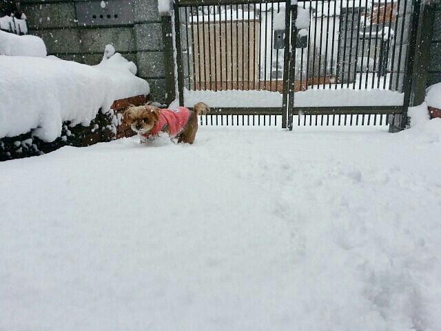 雪のため臨時店休_a0246319_09502099.jpg