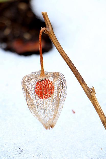 今 一番 寒い冬の季節 _d0150720_142947100.jpg