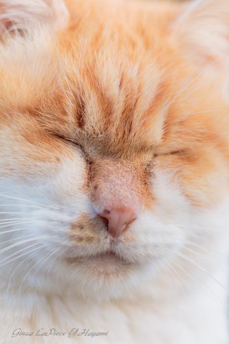 猫のいる風景 デブチンのドアップ_b0133053_092969.jpg
