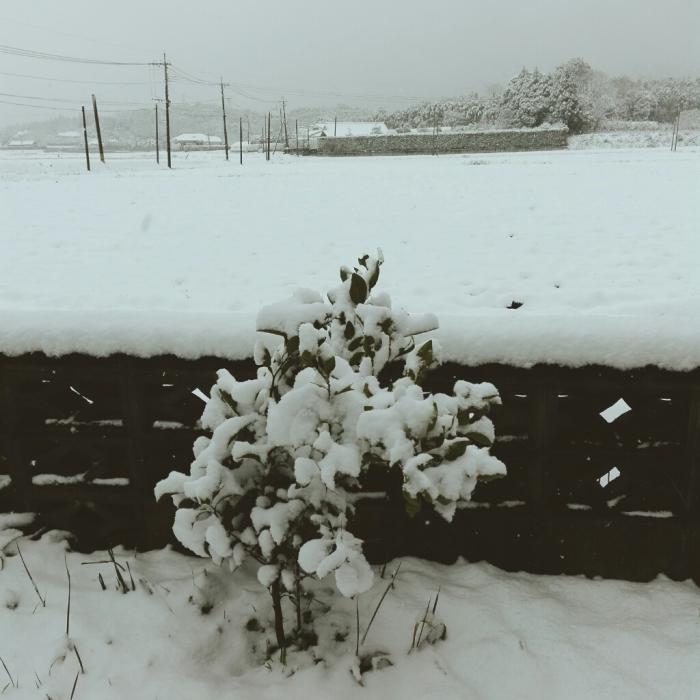 雪だー!_f0131255_12070626.jpg