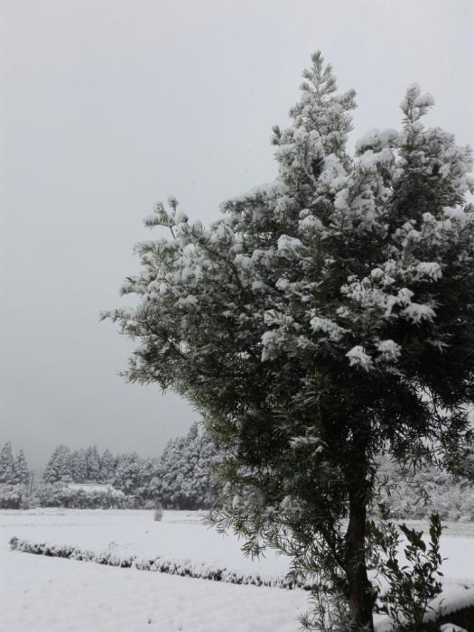 雪だー!_f0131255_12072227.jpg