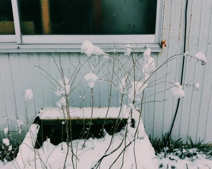 雪だー!_f0131255_12074340.jpg