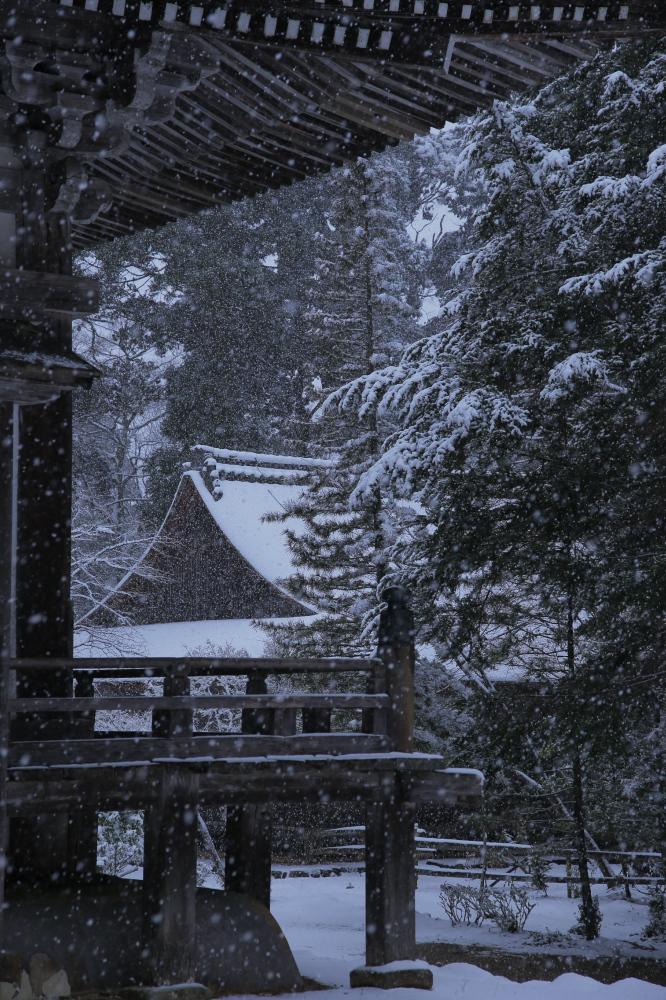 神護寺 雪景色 2016                                 _f0021869_21483958.jpg