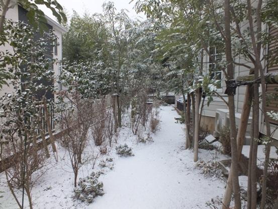 我が家の雪景色_b0214473_10502412.jpg