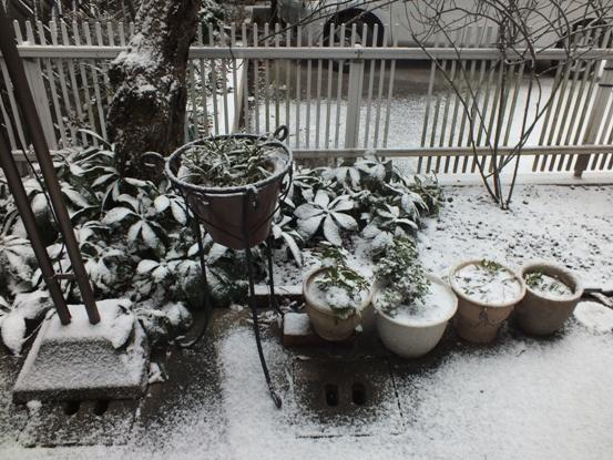 我が家の雪景色_b0214473_10503560.jpg