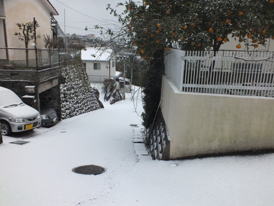 我が家の雪景色_b0214473_1050453.jpg