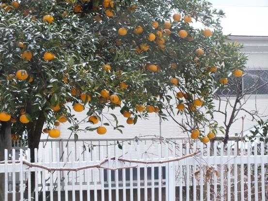 我が家の雪景色_b0214473_1051619.jpg