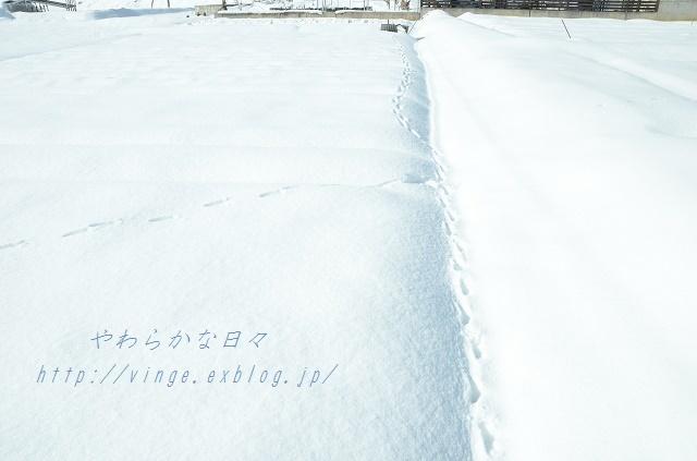 冬将軍がやってきた~_a0158478_15082227.jpg