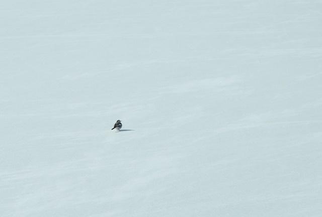 冬将軍がやってきた~_a0158478_15500531.jpg