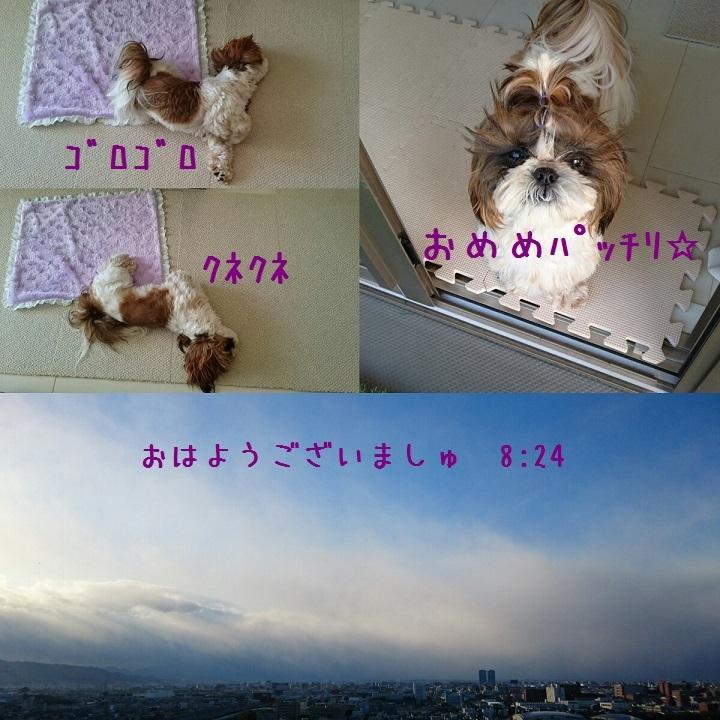 c0363378_15584664.jpg