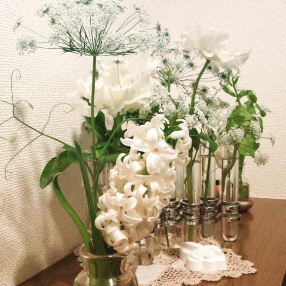 白いお花尽くし!_b0065587_19044316.jpg