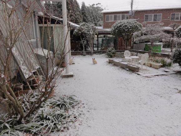 1月24日 大雪!!_e0174091_12591296.jpg