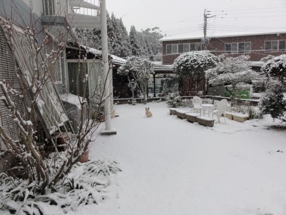 1月24日 大雪!!_e0174091_12594581.jpg