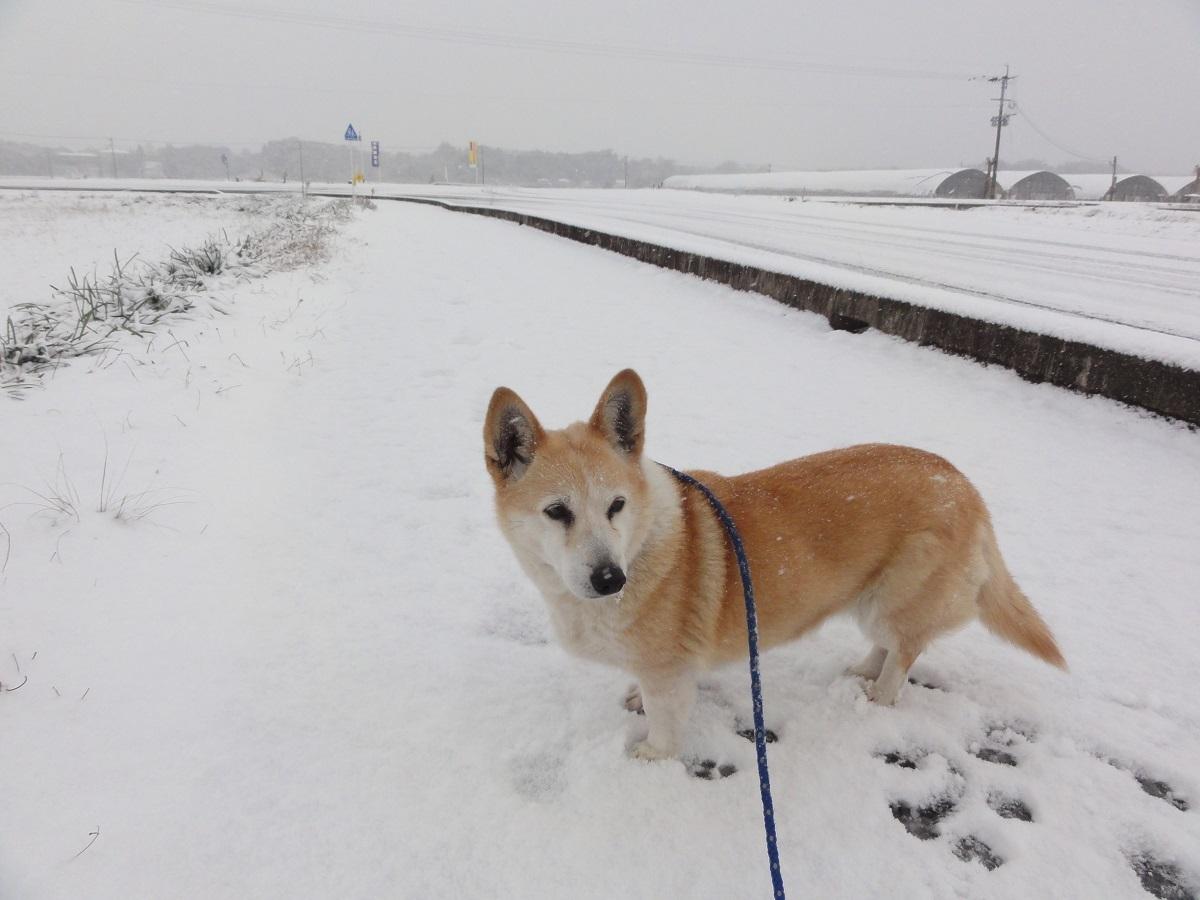 1月24日 大雪!!_e0174091_13012194.jpg