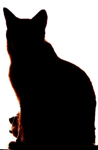 黒ねこ!_a0333195_11502114.jpg