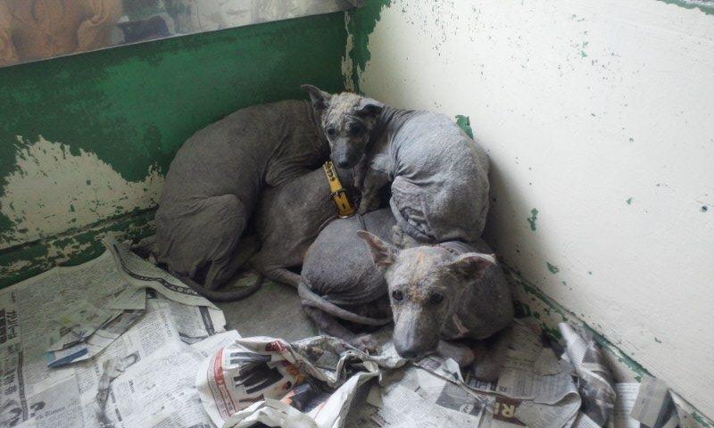 センター収容の皮膚病の犬たち_f0242002_20204013.jpg