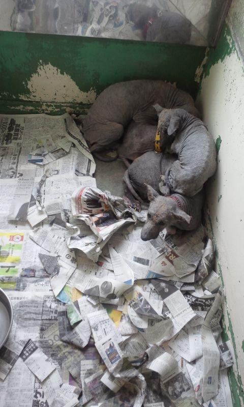 センター収容の皮膚病の犬たち_f0242002_20205420.jpg