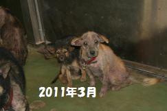 センター収容の皮膚病の犬たち_f0242002_2022138.jpg