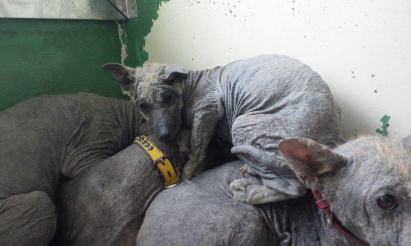 センター収容の皮膚病の犬たち_f0242002_20222630.jpg
