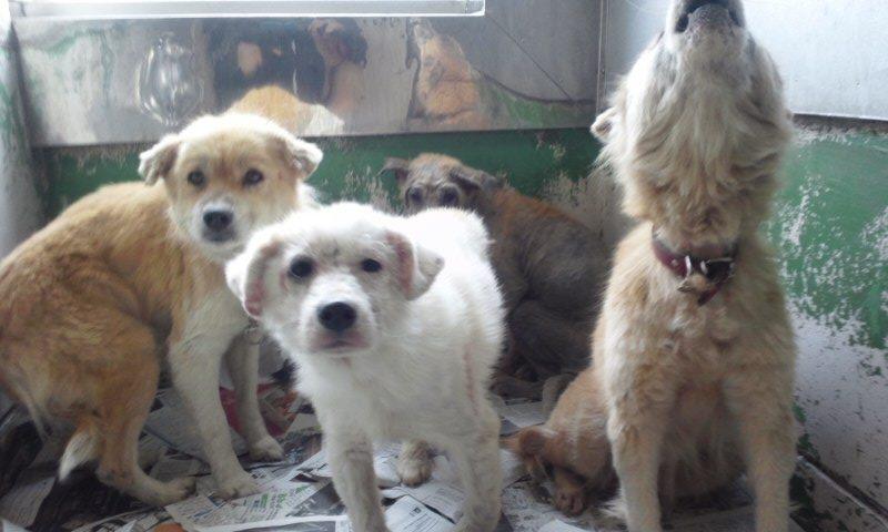 センター収容の皮膚病の犬たち_f0242002_20223933.jpg