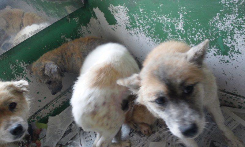 センター収容の皮膚病の犬たち_f0242002_20225259.jpg