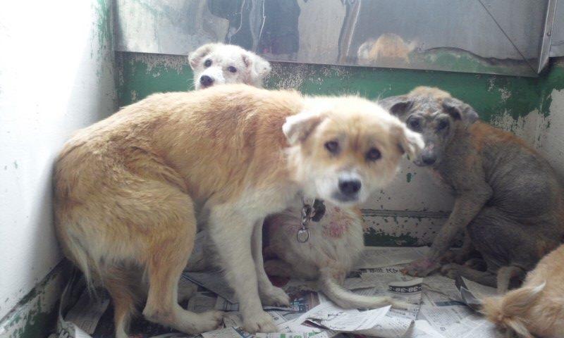 センター収容の皮膚病の犬たち_f0242002_20231615.jpg