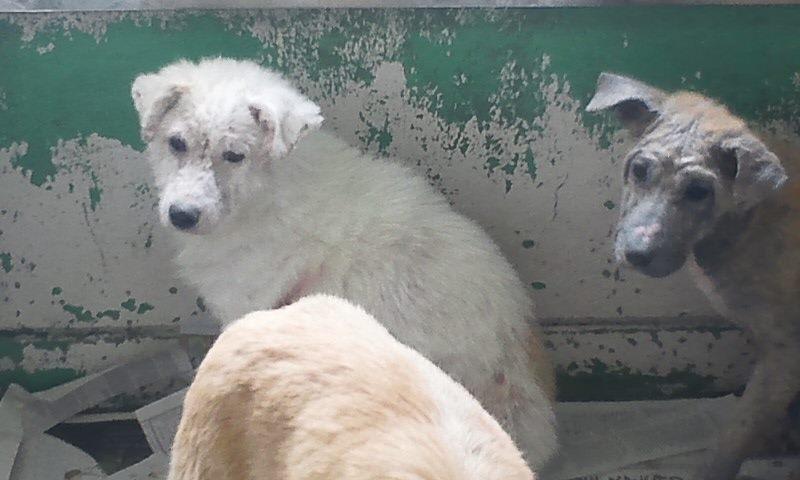 センター収容の皮膚病の犬たち_f0242002_20232632.jpg