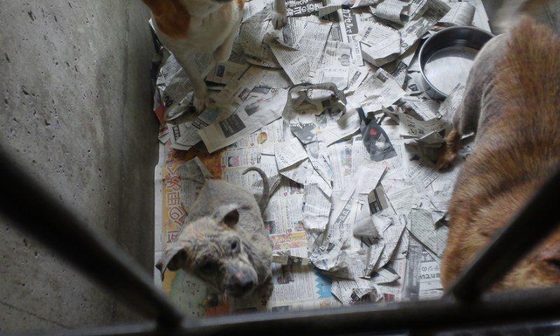 センター収容の皮膚病の犬たち_f0242002_2023359.jpg