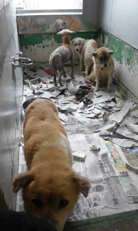 センター収容の皮膚病の犬たち_f0242002_20244447.jpg