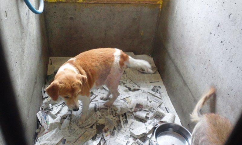 センター収容の皮膚病の犬たち_f0242002_202473.jpg
