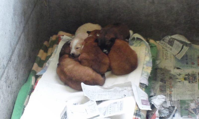 センター収容の皮膚病の犬たち_f0242002_20272512.jpg