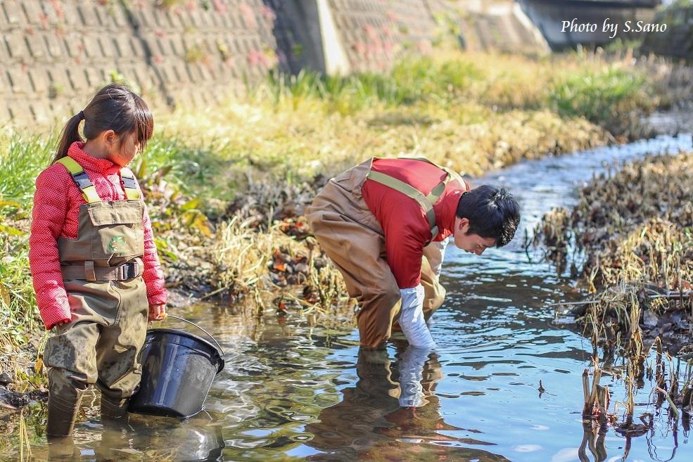 冬の侍従川掃除&調査(2016年1月)_b0348205_19363364.jpg