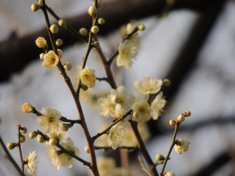 2月「茶の湯 初・中級」稽古日_a0056406_16145735.jpg