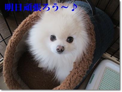 b0167519_10585981.jpg