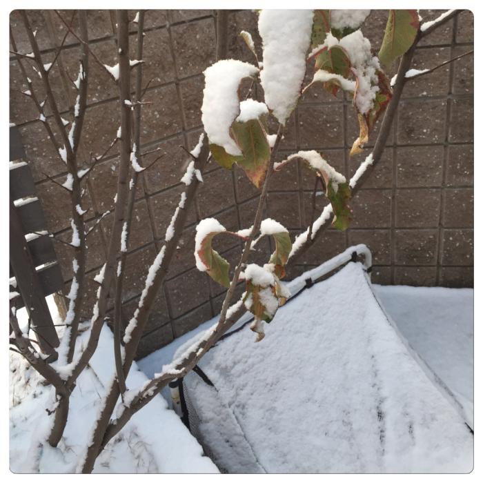 雪の降る日_c0170233_15184943.jpg