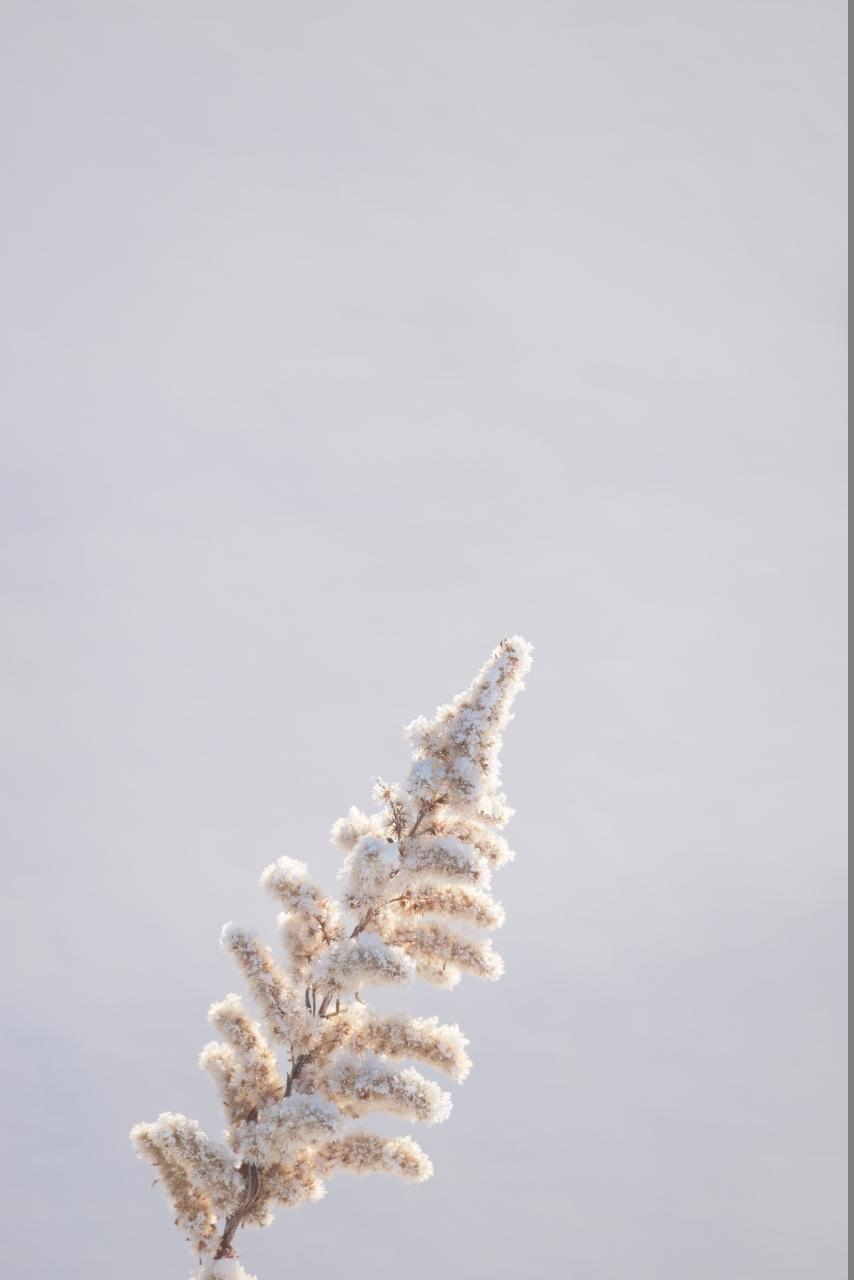 新雪の朝 Nikon D810A_f0050534_21500312.jpg