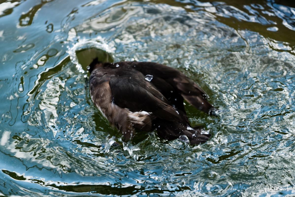 京都市動物園 -1-_f0152550_228224.jpg