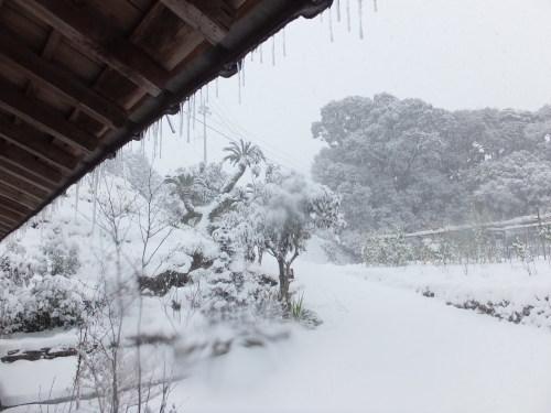 記録的大雪の昨日_d0336460_17170933.jpg
