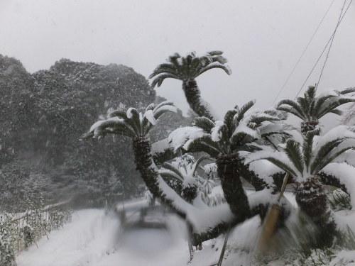 記録的大雪の昨日_d0336460_17314677.jpg