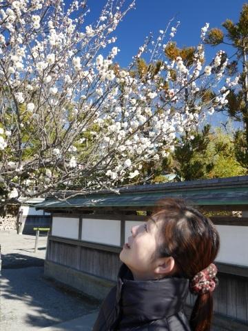 鶴岡八幡宮の梅_a0351368_19093481.jpg