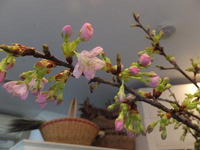 オークリーフ(春の花木)_f0049672_17345468.jpg