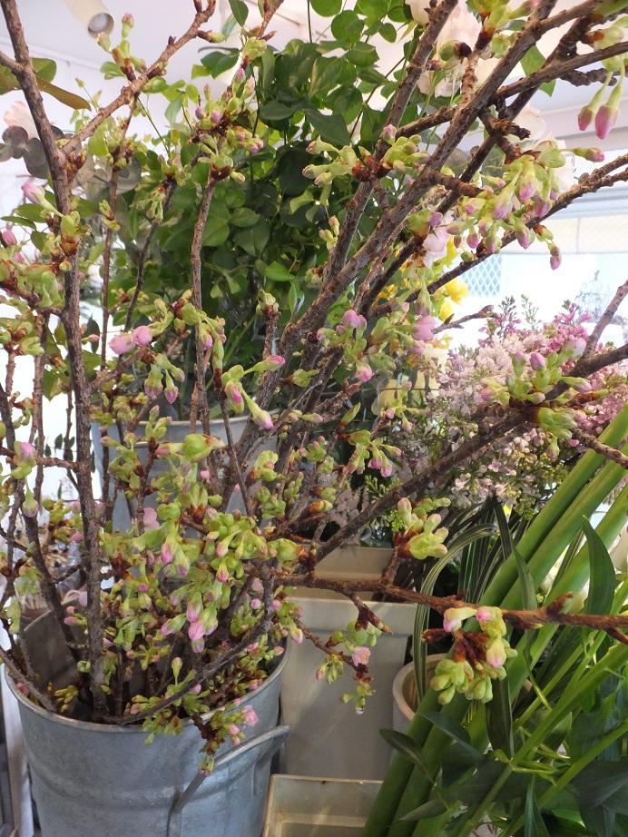 オークリーフ(春の花木)_f0049672_1735678.jpg